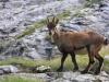 animali-fauna-parco-orobie-valle-brembana-300x200