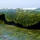 alghemariner