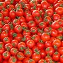 pomodori-r