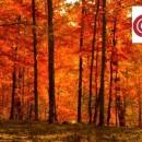 autunno2rr